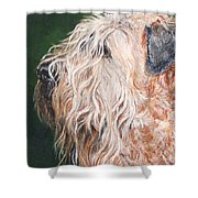 Pascal, Soft Coated Wheaten Terrier Shower Curtain