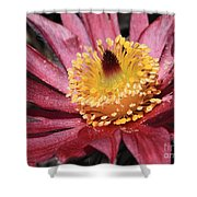 Pasque Flower Macro Shower Curtain