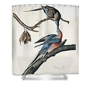 Passenger Pigeon Shower Curtain by John James Audubon