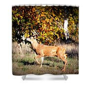 Passing Buck In Autumn Field Shower Curtain
