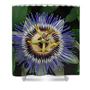 Passion Bloom Vi Shower Curtain