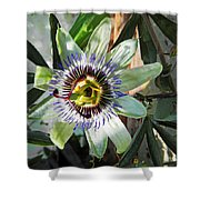 Passion Flower Close-up Shower Curtain
