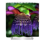 Passion Flower Ver. 10 Shower Curtain