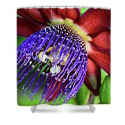 Passion Flower Ver. 11 Shower Curtain