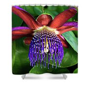 Passion Flower Ver. 13 Shower Curtain