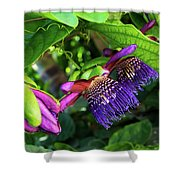 Passion Flower Ver. 14 Shower Curtain