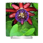 Passion Flower Ver. 15 Shower Curtain