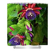 Passion Flower Ver. 16 Shower Curtain