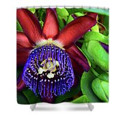 Passion Flower Ver. 17 Shower Curtain
