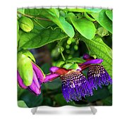 Passion Flower Ver. 18 Shower Curtain