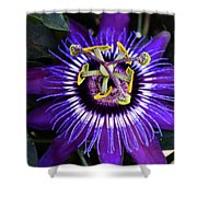 Passion Flower Ver. 4 Shower Curtain