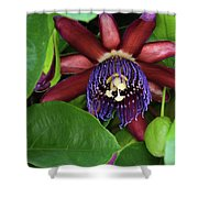 Passion Flower Ver. 8 Shower Curtain