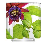 Passion Flower Ver. 9 Shower Curtain