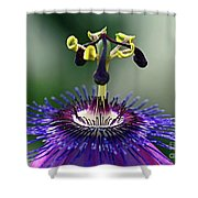 Passion For Purple  Shower Curtain