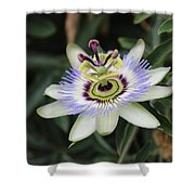 Passion Fruit  Shower Curtain