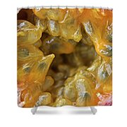 Passion Fruit In A Cut Shower Curtain