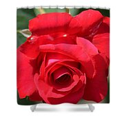 Passion Rose Shower Curtain