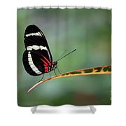 Passion-vine Butterfly 2017 Shower Curtain