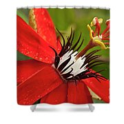 Passionate Flower Shower Curtain