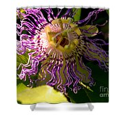 Passionflower Shower Curtain