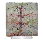 Pastel Forest Shower Curtain