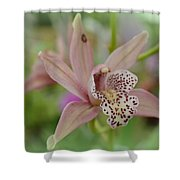 Pastel Orchid Shower Curtain