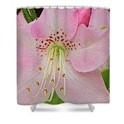 Pastel Pink  Azalea Shower Curtain