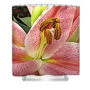 Pastel Pink Lily Shower Curtain