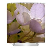 Pastel Purple Pleasure Shower Curtain