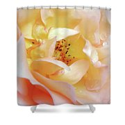 Pastel Rose Shower Curtain