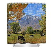 Pasture With A View Shower Curtain