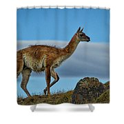 Patagonian Guanaco - Chile Shower Curtain