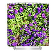 Patch Of Pansies Shower Curtain