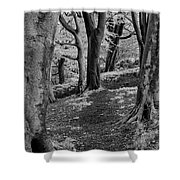 Path In Crownest Woods Shower Curtain