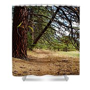 Path Of Enlightenment Shower Curtain
