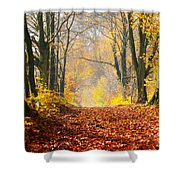 Path Of Red Leaves Towards Light Shower Curtain