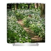 Path Through A Deciduous Forest, Wild Garlic Shower Curtain