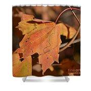 Path Through A Leaf Shower Curtain