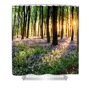 Path Through Bluebell Woods Shower Curtain