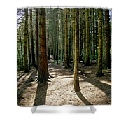 Path Through The Woods. Shower Curtain