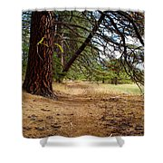 Path To Enlightenment 1 Shower Curtain