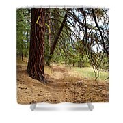 Path To Enlightenment 2 Shower Curtain