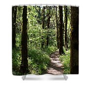 Pathway Through The Woods Shower Curtain