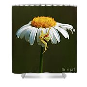 Patience... Shower Curtain