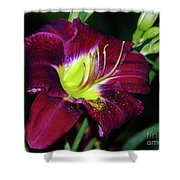Patricia Neal Daylily Shower Curtain