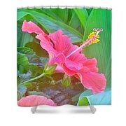 Pat's Hibiscus  Shower Curtain