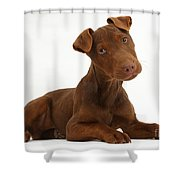 Patterdale Terrier Puppy Shower Curtain