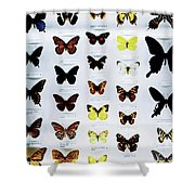 Pattern Made Out Of Many Different Butterfly Species Shower Curtain