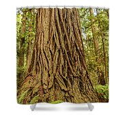 Patterned Redwood Shower Curtain