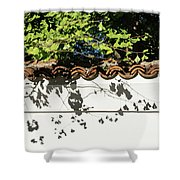 Patterned Sunshine - Ginkgo Shadows On A White Stucco Wall Shower Curtain